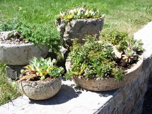 Planted Hypertufa containers