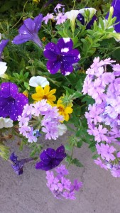 'Starry night' petunias, lilac verbena and Gold bidens